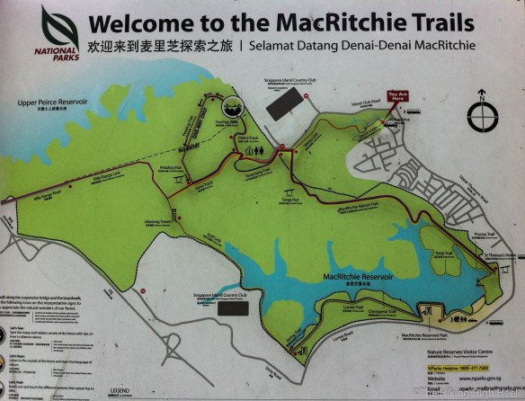 Hiking in Singapur The MacRitchie Trails