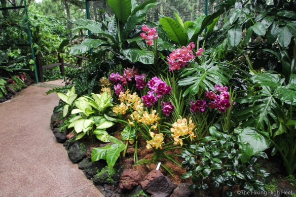 OrchidGarden-10