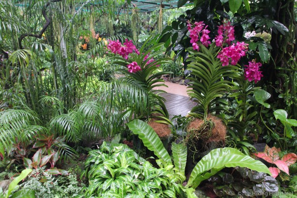OrchidGarden-11