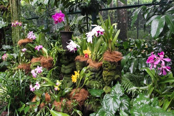 OrchidGarden-12