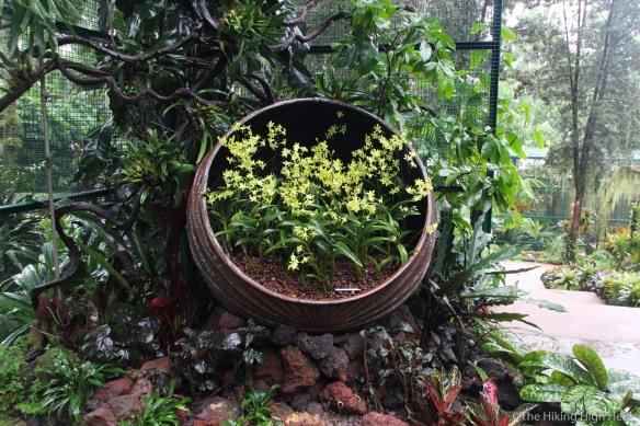 OrchidGarden-14