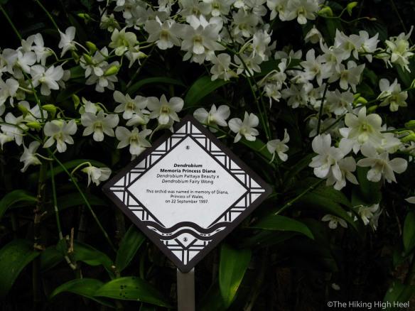 OrchidGarden-19