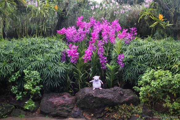 OrchidGarden-2