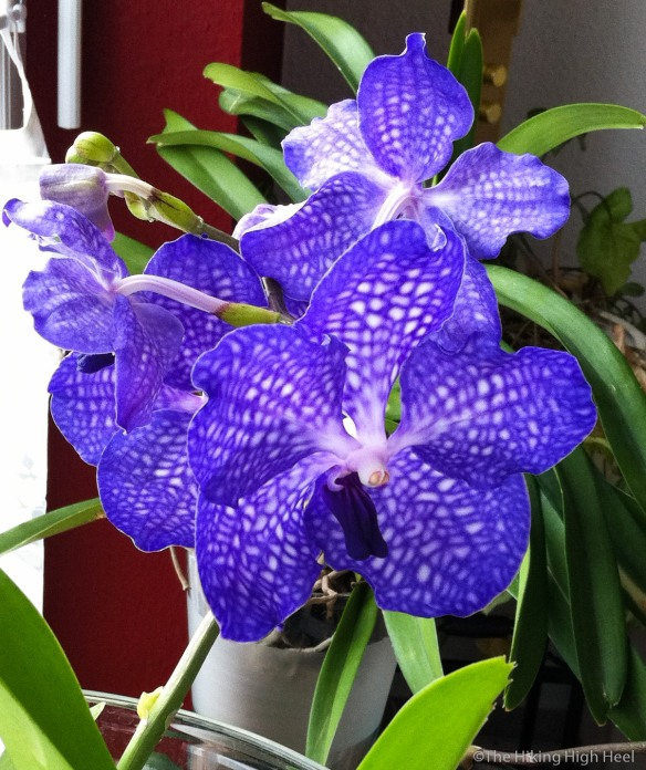 OrchidGarden-25