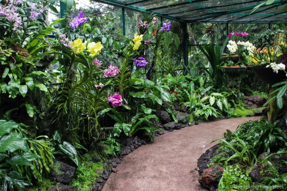OrchidGarden-9